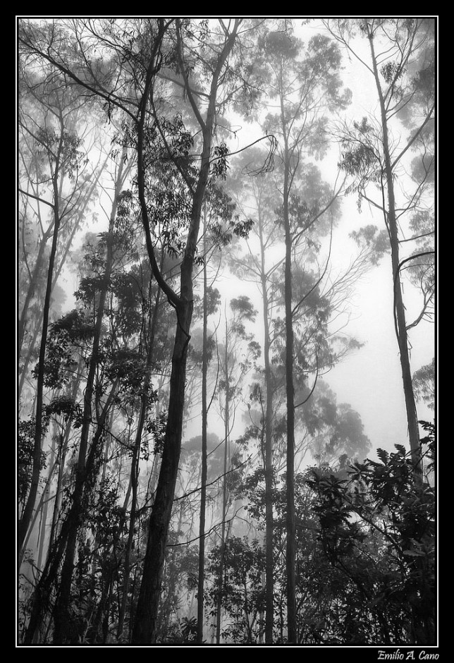 Bosque húmedo colombiano